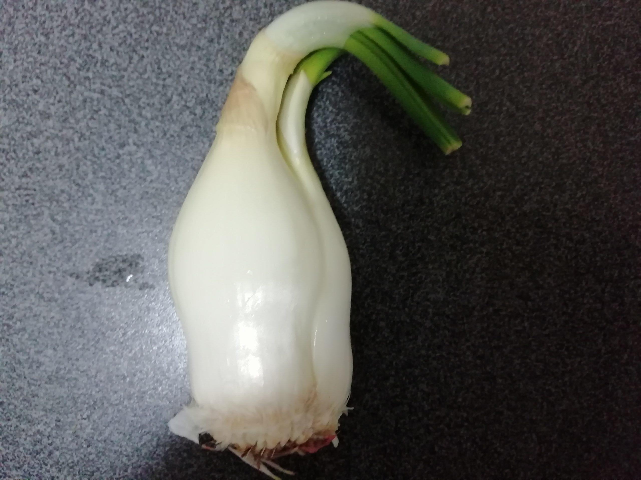 玉ねぎ 芽